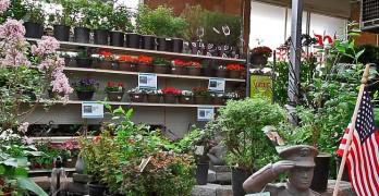 Steadman's Greenhouse Miles City Montana