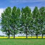 Planting Trees — Some Basics
