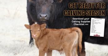 Calving Supplies