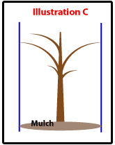 Tree_Planting_Illustration-C