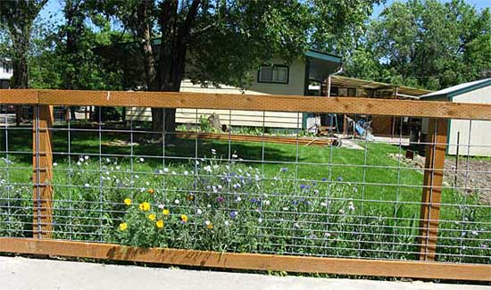 Hog wire Fence flowers